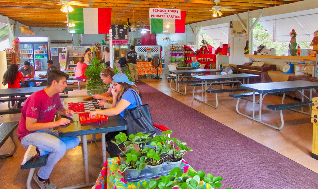 Phil's Berry Farm