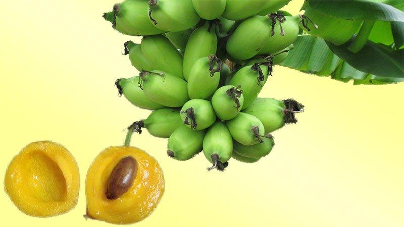 Banana and Gamboge