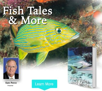 Fish Tales and More