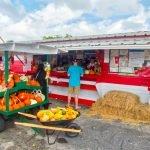 Burrs Berry Farm - Harvest Time