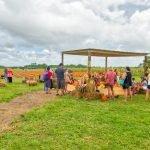 Burrs Berry Farm - Pumpkin Patch