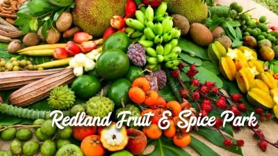 Preston B. Bird/Mary Heinlein Fruit and Spice Park - Redland Fruit & Spice Park