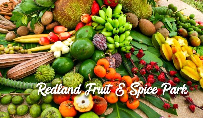 Preston B. Bird/Mary Heinlein Fruit and Spice Park - Redland Fruit & Spice Park