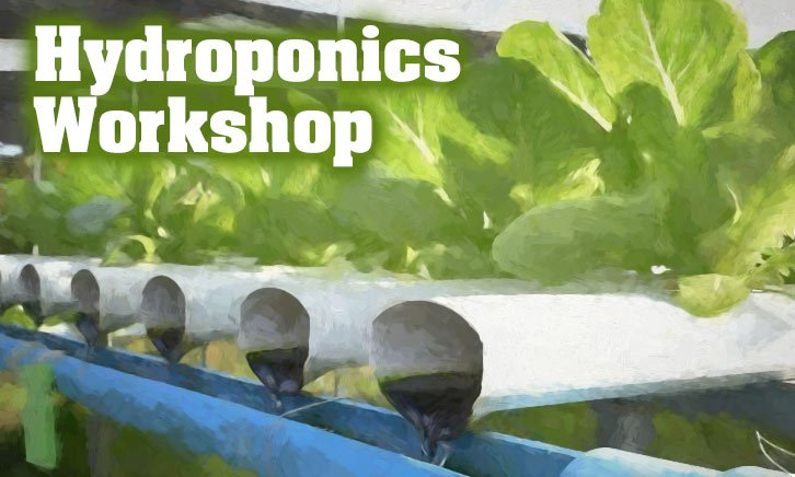 Hydroponics workshop