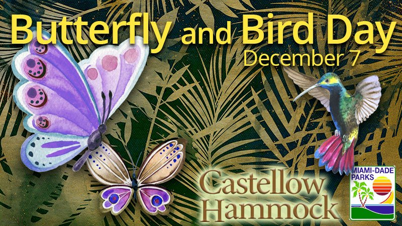 Butterfly and Bird Day at Castellow Hammock